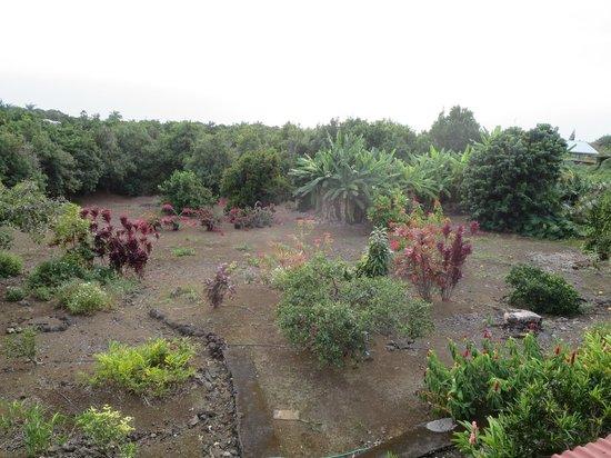 Manago Hotel : Gardens