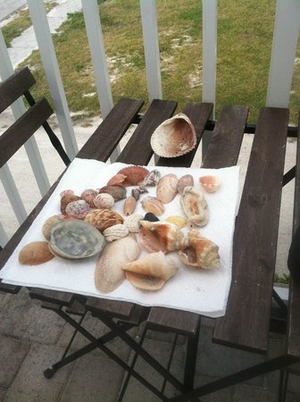 Coconut Inn: Shells