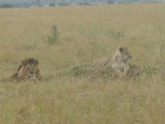 Safari Kenya Tanzania: masai mara