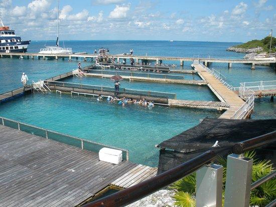 Dolphin Discovery Isla Mujeres : Piscinas do Dolphin Discovery