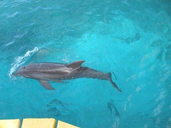 Dolphin Discovery Isla Mujeres : Golfinho