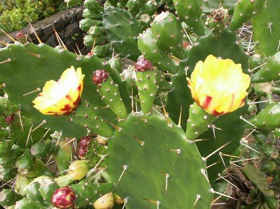 Solar de Boaventura: Jardins