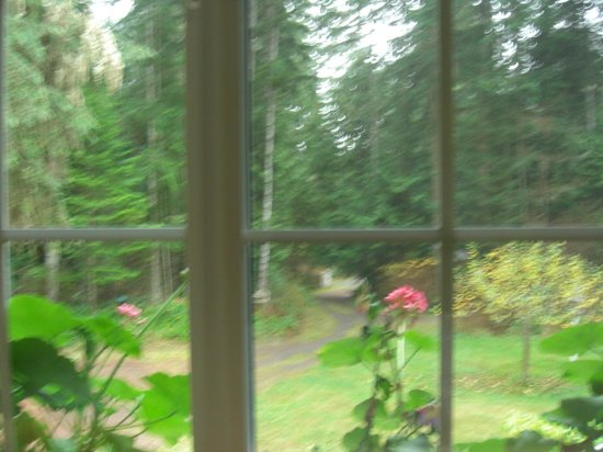 A Hidden Haven Bed and Breakfast : View from Morning Dove