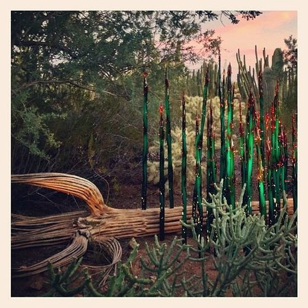 Las Noches De Las Luminarias Picture Of Desert Botanical Garden Phoenix Tripadvisor