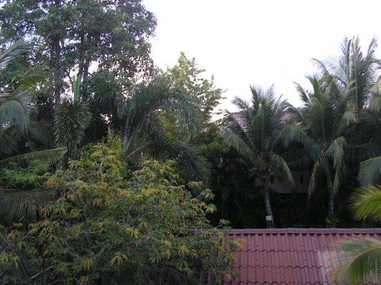 Kata Country House: Вид из номера