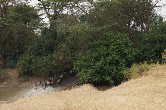 Soroi Serengeti Lodge: Grumetti crossing