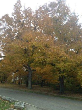 Cherokee Park: Fall Colors