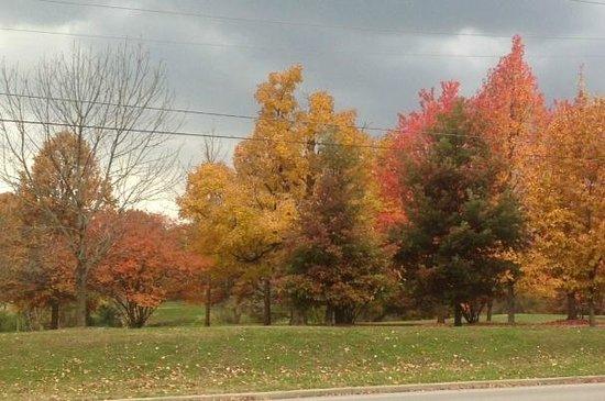 Cherokee Park : Fall colors