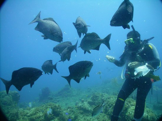 Jamaica Scuba Divers Ltd.: great dives