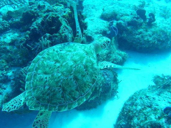 Sunrise Divers: Sea Turtle