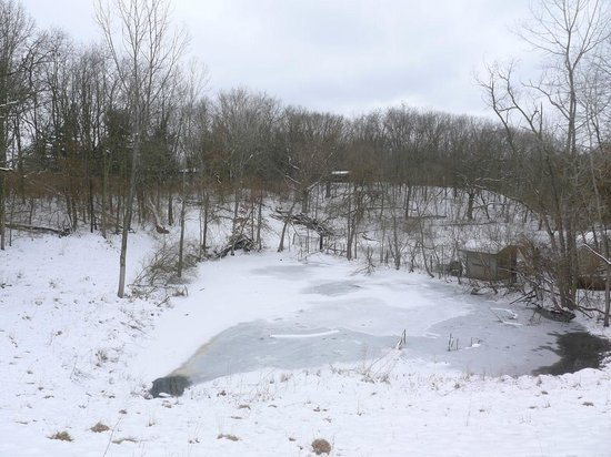 Wildlife Prairie Park: frozen pond