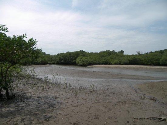 Las Tablas, Panama: Estuario