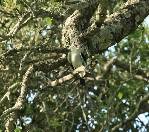 Tydon Safari Camp: Woodland Kingfisher