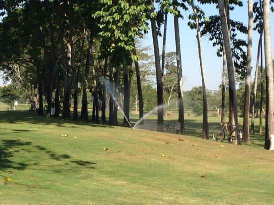 Kaziranga Golf Resort : View from the Resort
