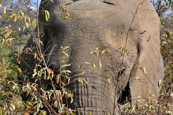 Naledi Bushcamp and Enkoveni Camp: Elephant