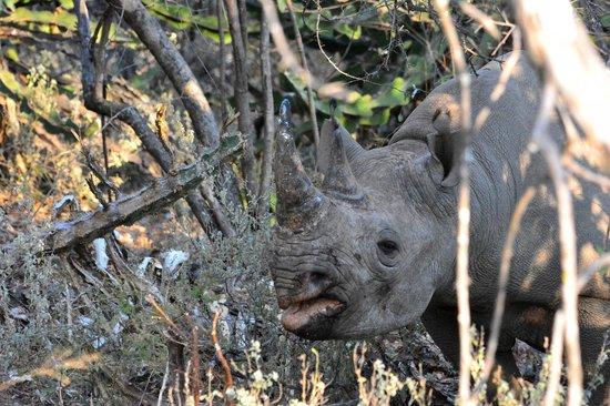 Naledi Bushcamp and Enkoveni Camp: Black Rhino