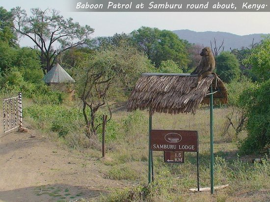 Shaba National Reserve : checkpost at Samburu round about ...