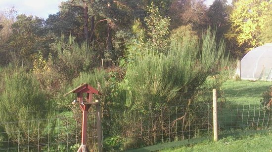 Ornum House: Gardens