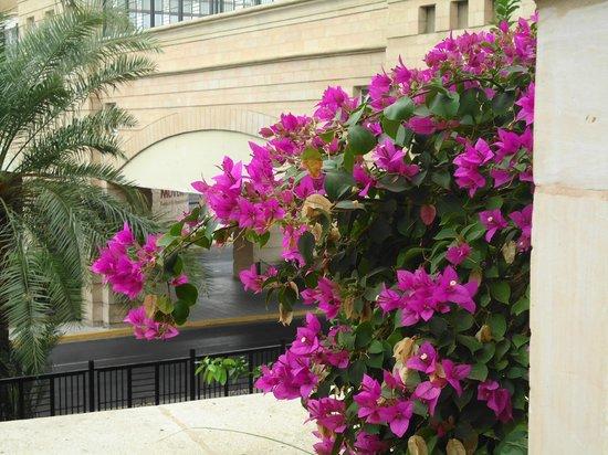Movenpick Resort & Residences Aqaba: Broen set gennem et hav af blomster