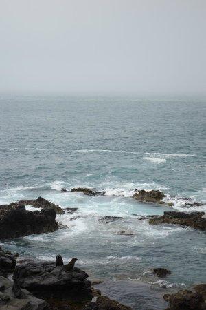 Akaroa Seal Colony Safari: Lovely sea