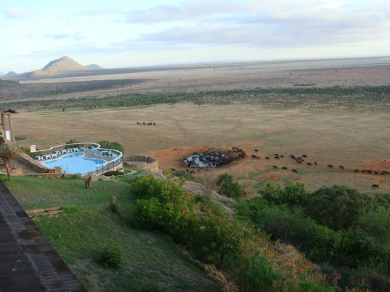 Voi Safari Lodge: Quello che vedrete dalla vostra camera.