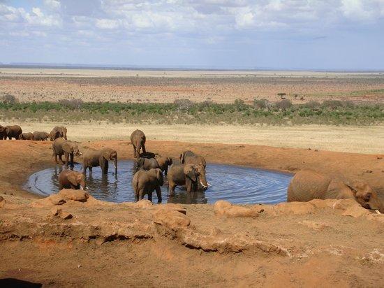 Voi Safari Lodge: Vista della pozza dal cunicolo sotto il Lodge.