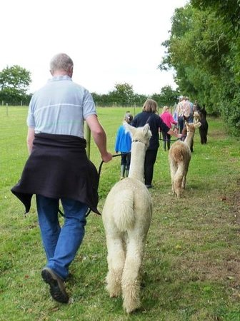 Woodbine Farm Alpacas