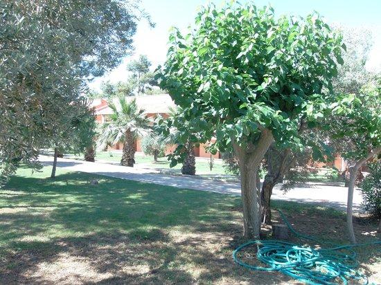 Kustur Club Holiday Village: Gartenanlage