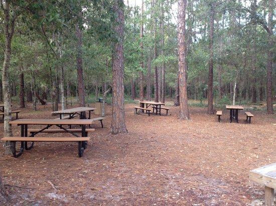 Vacation Village at Parkway: Zona del bosque