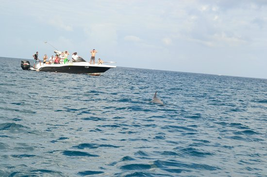 Le Meridien Ile Maurice: Swimming with dolphins