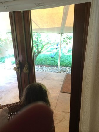 The Oberoi Rajvilas: peacocks all around guest rooms