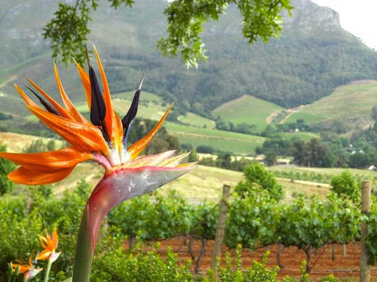 Indochine : Beautiful plants in the garden