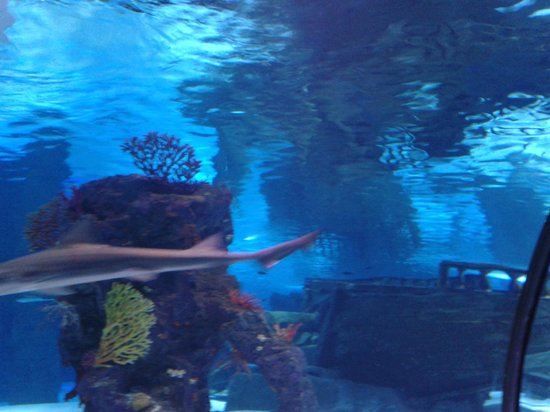 аквариум - Picture of Antalya Aquarium, Antalya - TripAdvisor