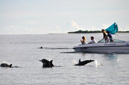 Kanuhura : Sortie avec les dauphins