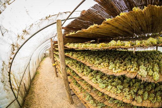 Weingut & Landhaus Willi Opitz: Raisin vine