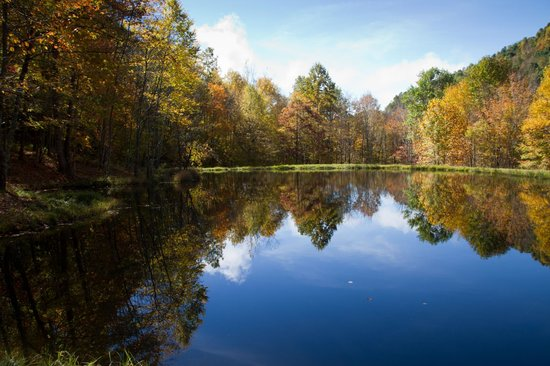 Blue Bear Mountain Camp: The pond
