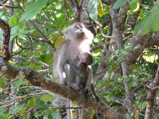 Gli abitanti della Monkey Bay