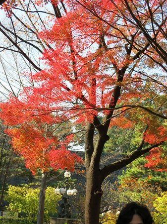 The East Gardens of the Imperial Palace (Edo Castle Ruin): 紅葉がきれいです