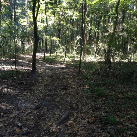 Lake Jackson Mounds Archaeological State Park: On the nature trail
