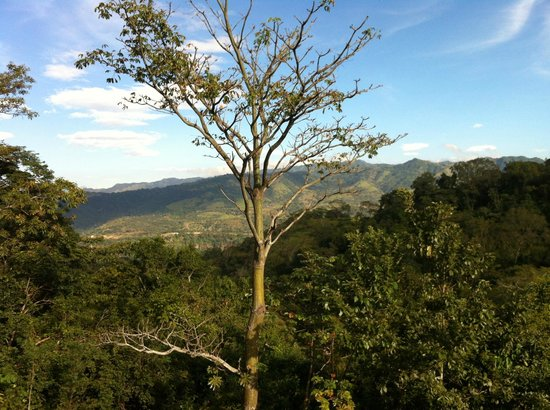 Amatierra Retreat and Wellness Center : View from Yoga Studio