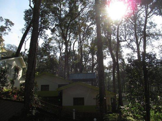 Greenspaces B&B Munnar : gsm