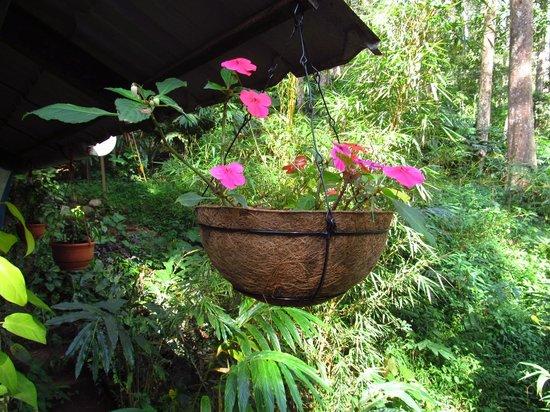 Greenspaces B&B Munnar : flowers