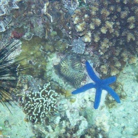 Swengland Dive Resort : corals