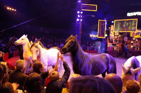Big Apple Circus: Beautiful horses - black and white - like a dream!