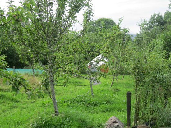 Ireland Glamping - Pink Apple Orchard : Yurt in the distance