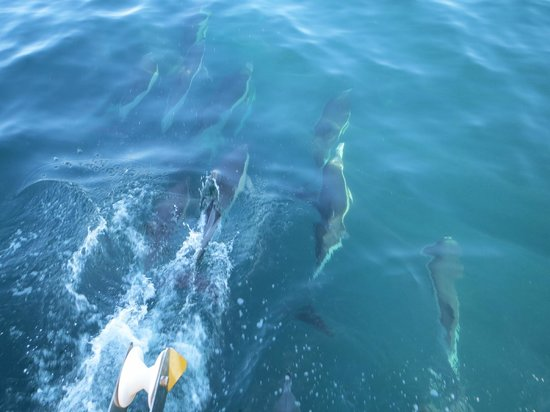 Dolphin Adventure: Our first sighting