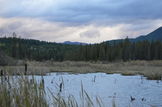 Historic Tamarack Lodge : beaver pond