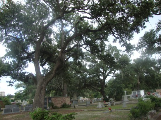 Old Biloxi Cemetery: Раскидистые деревья...