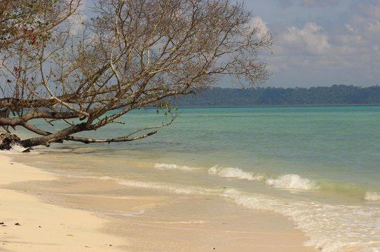 Dolphin Resort: Beach