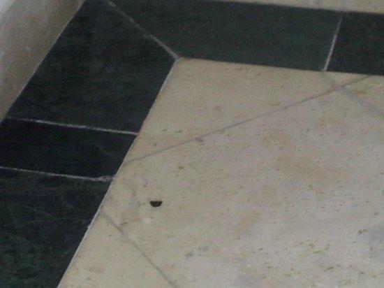 Grand Oasis Sens: scarafaggio ucciso con spray repellente/deodorante